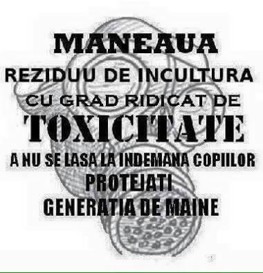 Maneaua