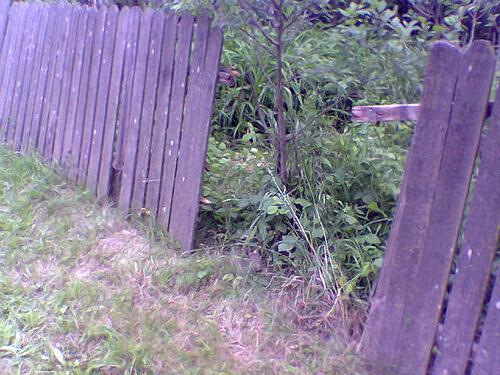 Gard stricat