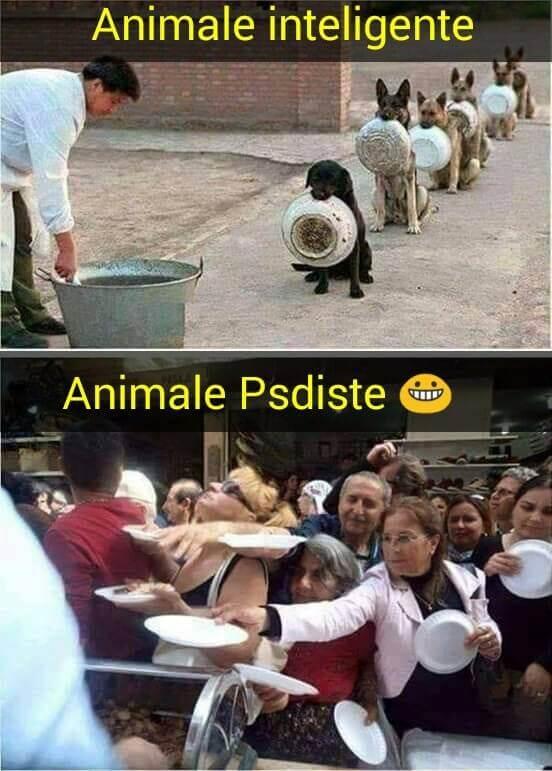 Animale inteligente versus animale PeSeDiste
