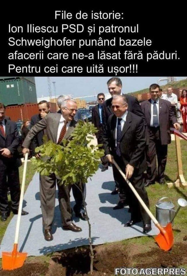 PSD = mafia padurilor