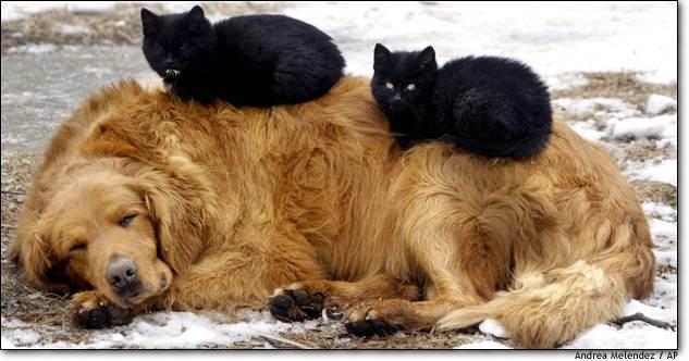 Caine si pisici
