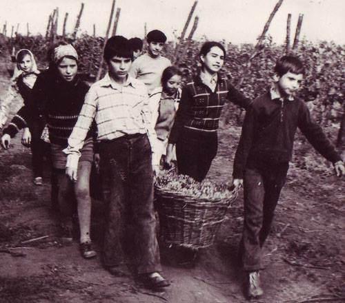 Raiul comunist: elevi obligati sa mearga la strangerea recoltelor
