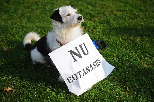 Nu eutanasierii